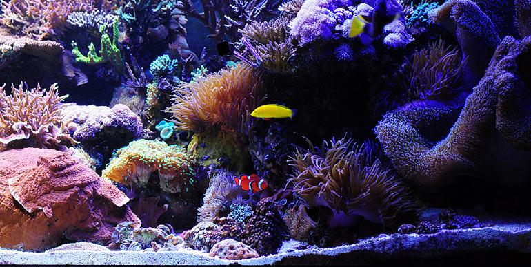 Reef Addicts What Does It Cost To Set Up A Saltwater Reef Tank