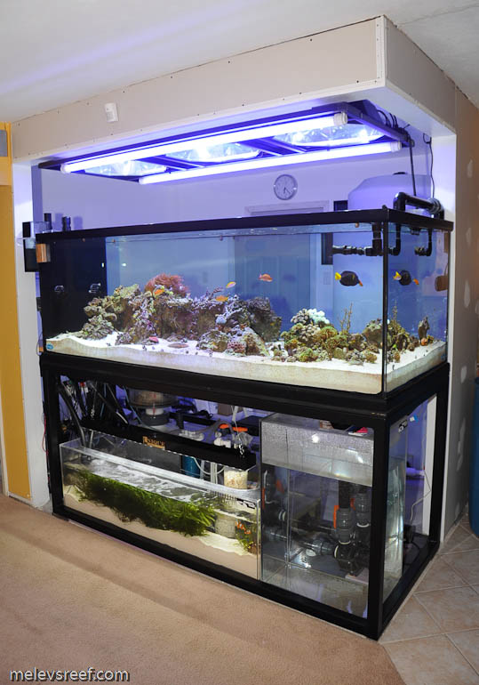 Reef addicts tank stands wood versus steel for Snap on fish tank