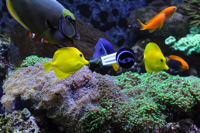 Reef Addicts   Question about setting up a saltwater fish only tank
